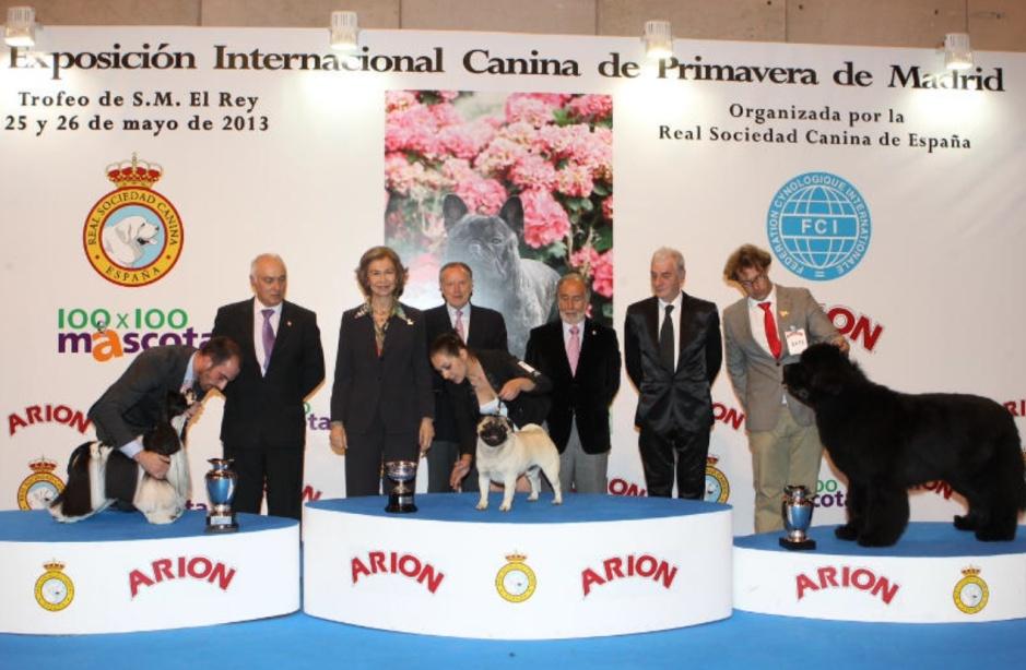 Internacional Dog Show Uk